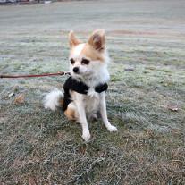 Profil kontorhund Lucy